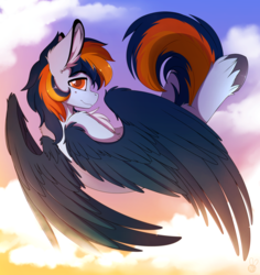 Size: 2300x2440 | Tagged: artist:meggchan, chest fluff, fluffy, flying, hippogriff, looking at you, male, oc, oc only, oc:skysail, safe, solo, spread wings, stallion, sunset, unshorn fetlocks, wings