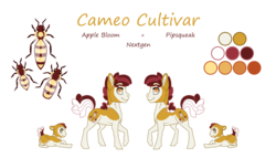 Size: 3496x2000   Tagged: safe, artist:jackiebloom, oc, oc:cameo cultivar, pony, baby, baby pony, colt, high res, male, offspring, parent:apple bloom, parent:pipsqueak, parents:pipbloom, reference sheet, simple background, solo, transparent background