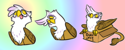 Size: 1280x512 | Tagged: safe, artist:stupidshepherd, gilda, griffon, abstract background, behaving like a bird, behaving like a cat, birb, birds doing bird things, cardboard box, catbird, chest fluff, cute, female, gildadorable, if i fits i sits, looking up, no pupils, silly, solo, telegram sticker, tongue out