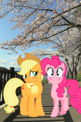 Size: 640x960 | Tagged: artist needed, safe, editor:lisaloudleijon, applejack, pinkie pie, applepie, blushes, blushing, cherry blossoms, cute, date, female, flower, flower blossom, irl, japan, lesbian, photo, ponies in real life, shipping, tokyo