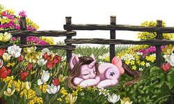 Size: 2157x1286   Tagged: safe, artist:erim-kawamori, oc, oc only, oc:cindy, pony, unicorn, bow, eyes closed, female, fence, flower, flower field, grass, mare, outdoors, prone, sleeping, smiling, solo, tail bow