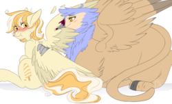 Size: 2000x1214 | Tagged: safe, artist:curiouskeys, oc, oc only, oc:orange cream, griffon, pegasus, pony, behaving like a bird, birds doing bird things, blushing, commission, female, preening, scrunchy face, spread wings, wings