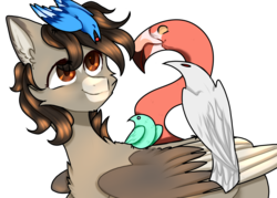 Size: 3084x2212 | Tagged: safe, artist:lama-fyrsenya9, oc, oc only, oc:xor, bird, blue jay, bluebird, flamingo, raven (bird), sphinx, brown eyes, cat tail, chest fluff, floppy ears, fluffy, happy, looking up, male, simple background, smiling, solo, sphinx oc, transparent background, wings
