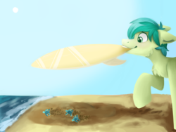 Size: 3200x2400 | Tagged: artist:spindlespice, baby turtle, beach, cheek fluff, chest fluff, cute, ear fluff, earth pony, heartwarming description, mouth hold, pony, safe, sandabetes, sandbar, solo, surfboard