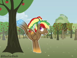 Size: 2592x1936 | Tagged: apple, apple tree, artist:dasturdash, base used, freckles, magical lesbian spawn, male, oc, oc:cloudy apple, offspring, parent:applejack, parent:rainbow dash, parents:appledash, pegasus, pegasus oc, safe, stallion, sweet apple acres, tree