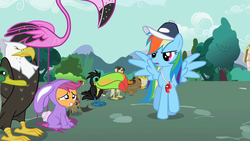 Size: 1280x720 | Tagged: animal, animal costume, bald eagle, bat, bird, bunny costume, butterfly, clothes, coach rainbow dash, costume, duck, eagle, edit, edited screencap, falcon, female, filly, flamingo, foal, grin, mare, may the best pet win, monarch butterfly, nervous, nervous grin, pegasus, pony, rainbow dash, safe, scootaloo, screencap, smiling, toucan, whistle