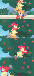 Size: 1600x3568 | Tagged: apple, apple bloom, applejack, apple tree, balancing, big macintosh, bucket, carrying, comic, edit, edited screencap, equestria girls, equestria girls series, falling, fence, food, holidays unwrapped, losing balance, on top, safe, screencap, screencap comic, spoiler:eqg series (season 2), tree