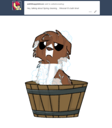 Size: 800x911 | Tagged: safe, artist:askwinonadog, winona, dog, ask winona, ask, bath, bath time, bathing, bucket, looking at you, simple background, soap, solo, tumblr, water, wet, white background, winona is not amused