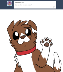 Size: 800x920 | Tagged: safe, artist:askwinonadog, winona, dog, ask winona, ask, cute, looking at you, paw pads, paws, simple background, smiling, solo, toe beans, tumblr, underpaw, white background, winonabetes