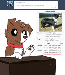 Size: 800x922 | Tagged: safe, artist:askwinonadog, winona, dog, ask winona, ask, border collie, irl, irl dog, simple background, solo, tumblr, white background, wikipedia