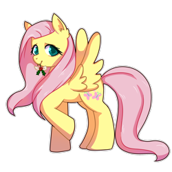 Size: 1024x1024   Tagged: safe, artist:solareflares, fluttershy, pegasus, pony, christmas, cute, ear fluff, female, holiday, holly, looking at you, mare, mouth hold, shyabetes, simple background, solo, spread wings, transparent background, white outline, wings