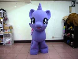 Size: 480x360 | Tagged: safe, twilight sparkle, alicorn, irl, looking at you, photo, solo, taiwan, twilight sparkle (alicorn)