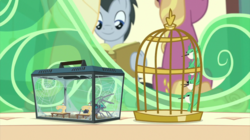 Size: 2880x1618 | Tagged: safe, screencap, fire flicker, lucky clover, bird, hummingbird, spider, star spider, the last problem, spoiler:s09e26, animal, animosity, bird cage, box, cage, flying, friendship student, glass, miniature, seat, sewing machine, snarling, spider web, terrarium