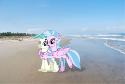 Size: 1678x1123 | Tagged: safe, artist:cheezedoodle96, artist:reaver75, edit, silverstream, terramar, classical hippogriff, hippogriff, beach, brother and sister, cute, duo, female, hug, irl, jewelry, male, necklace, photo, ponies in real life