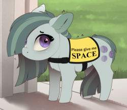 Size: 3246x2825 | Tagged: safe, artist:evehly, marble pie, earth pony, pony, adorable distress, behaving like a dog, butt fluff, chest fluff, communicoat, cute, ear fluff, evehly is trying to murder us, female, floppy ears, hair over one eye, leg fluff, looking at you, looking up, marblebetes, mare, ponified animal photo, sad, sadorable, service dog, service pony, shivering, shrunken pupils, shy, smol, solo, tail between legs, weapons-grade cute, wide eyes, worried