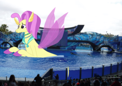 Size: 4002x2853 | Tagged: safe, artist:oceanrailroader, ocean flow, pony, seapony (g4), giant pony, giant seapony, irl, macro, photo, ponies in real life