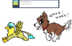 Size: 1000x641 | Tagged: safe, artist:askwinonadog, winona, oc, oc:cloud striker, dog, griffon, ask winona, ask, chase, duo, griffon oc, simple background, tongue out, tumblr, white background, woof