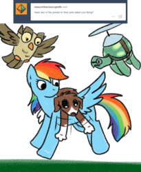Size: 800x974 | Tagged: artist:askwinonadog, ask, ask winona, dog, flying, owl, owlowiscious, propeller, rainbow dash, safe, simple background, tank, tortoise, tumblr, white background, winona
