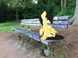 Size: 1600x1200 | Tagged: irl, kurt cobain, nirvana, oc, oc:assetto-forza massimo, oc only, park bench, pegasus, photo, photoshop, pony, real life background, safe, seattle, sitting, tree, united states, viretta park, washington