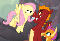 Size: 1361x939 | Tagged: safe, screencap, fluttershy, garble, smolder, dragon, pegasus, pony, sweet and smoky, angry, badass, boop, cropped, dragoness, fangs, female, flutterbadass, fluttershy is not amused, flying, glare, looking at each other, male, mare, narrowed eyes, spread wings, unamused, wings