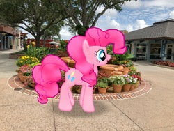 Size: 4032x3024   Tagged: safe, photographer:undeadponysoldier, pinkie pie, earth pony, pony, augmented reality, building, bush, disney springs, disney world, downtown disney, female, florida, fountain, gameloft, irl, mare, orlando, photo, ponies in real life, solo, tree, vacation