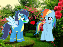 Size: 962x720 | Tagged: safe, artist:mlplary6, rainbow dash, soarin', pegasus, pony, clothes, female, flower in mouth, garden, goggles, male, rose, rose in mouth, shipping, soarindash, straight, uniform, wonderbolts uniform