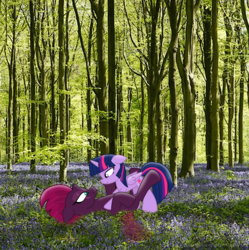 Size: 3331x3351 | Tagged: alicorn, artist:ejlightning007arts, beautiful, broken horn, eye scar, female, floppy ears, flower, forest, horn, lesbian, looking at each other, lying down, photoshop, pinned, safe, scar, shipping, tempestlight, tempest shadow, tree, twilight sparkle, twilight sparkle (alicorn), wood
