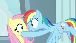 Size: 1920x1080 | Tagged: cutie mark, daring doubt, eyes wide open, fluttershy, hooves on cheeks, looking at each other, looking at someone, nose to nose, pegasus, pouty lips, rainbow dash, safe, screencap, shipping fuel, spoiler:s09e21, wings
