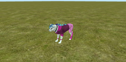 Size: 1920x948 | Tagged: 3d, all fours, feral heart, grass field, no tail, safe, solo, sonata dusk, species swap, wolf