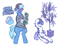 Size: 3035x2272 | Tagged: artist:bugbites, backwards ballcap, baseball cap, cap, cutie mark, drugs, earth pony, hat, hemp, marijuana, oc, oc:bluedream, safe, standing