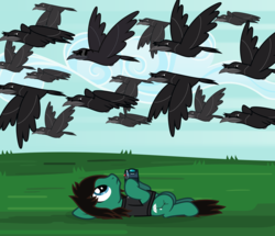 Size: 2028x1743 | Tagged: safe, artist:lightningbolt, derpibooru exclusive, bird, crow, earth pony, pony, derpibooru, .svg available, bring me the horizon, camera, clothes, cloud, cool crow, derpibooru badge, flying, frown, grass, hoof hold, looking up, male, meta, murder of crows, on back, outdoors, ponified, shirt, sky, solo, stallion, sunglasses, svg, t-shirt, tom sykes, vector, wings