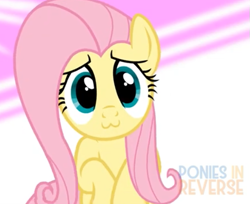Size: 525x428 | Tagged: safe, artist:reverse studios, edit, fluttershy, pony, :3, album cover, cute, female, happy, mare, music, shyabetes, solo, wings