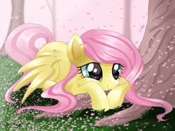 Size: 1024x768   Tagged: safe, artist:sunshineshiny, fluttershy, pegasus, pony, cherry blossoms, cute, female, flower, flower blossom, mare, prone, shyabetes, solo, tree