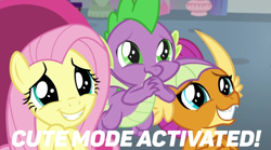 Size: 748x417 | Tagged: safe, edit, edited screencap, screencap, fluttershy, smolder, spike, dragon, pegasus, pony, sweet and smoky, spoiler:s09e09, cute, cute mode activated, dragoness, female, male, meme, puppy dog eyes, shyabetes, smolderbetes, spikabetes, text, wide eyes, winged spike