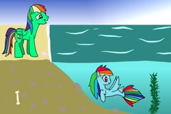 Size: 1280x854 | Tagged: safe, artist:platinumdrop, rainbow dash, oc, seapony (g4), beach, dawwww, request