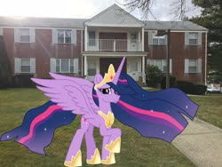 Size: 3264x2448 | Tagged: safe, edit, editor:topsangtheman, twilight sparkle, alicorn, pony, spoiler:s09e26, irl, looking at you, photo, ponies in real life, princess twilight 2.0, twilight sparkle (alicorn)