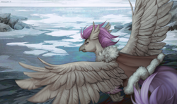 Size: 1518x900 | Tagged: safe, artist:margony, oc, oc only, hippogriff, clothes, cloud, flying, hippogriff oc, ice, jacket, male, ocean, pack ice, rock, sky, solo, spread wings, wings, winter, ych result