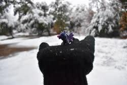 Size: 4496x3000 | Tagged: safe, artist:tinyequine, twilight sparkle, alicorn, clothes, female, gloves, irl, micro, outdoors, photo, plushie, smol, snow, twilight sparkle (alicorn)