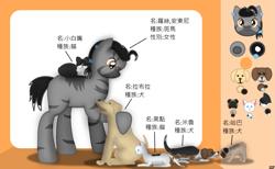 Size: 1465x900 | Tagged: safe, artist:99999999000, oc, oc:rossi anthony, cat, dog, pony, zebra, chinese, female, reference sheet, zebra oc