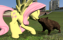 Size: 792x506 | Tagged: safe, artist:didgereethebrony, fluttershy, pegasus, pony, 3d, boop, cute, gmod, noseboop, screenshots, tongue out, wombat