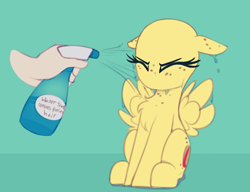 Size: 1069x820   Tagged: safe, artist:shinodage, edit, oc, oc only, oc:apogee, human, pegasus, pony, apogee getting sprayed, bad pony, behaving like a bird, chest fluff, cute, diageetes, disembodied hand, eyes closed, female, filly, floppy ears, fluffy, green background, hand, mare, no hair, no mouth, no nostrils, offscreen character, simple background, solo focus, spray bottle, this will end in jail time, wet