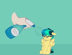 Size: 1069x820   Tagged: safe, artist:shinodage, edit, oc, oc only, oc:apogee, human, pegasus, pony, apogee getting sprayed, bad pony, behaving like a bird, chest fluff, cute, diageetes, disembodied hand, eyes closed, female, filly, floppy ears, fluffy, green background, hand, mare, offscreen character, shrinking, shrinking potion, simple background, solo focus, spray bottle, wet