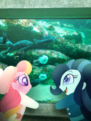 Size: 750x1000   Tagged: safe, artist:carouselunique, oc, oc only, oc:dolly dusk, oc:honeycrisp blossom, fish, equestria girls, aquarium, colored pupils, duo, equestria girls in real life, freckles, hat, offspring, parent:big macintosh, parent:chancellor neighsay, parent:princess cadance, parent:sonata dusk, parents:cadmac, parents:neighsaynota, starry eyes, suspenders, wingding eyes