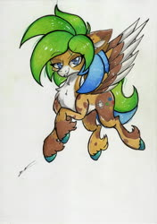 Size: 2460x3486 | Tagged: safe, artist:luxiwind, oc, oc:luxi wind, pegasus, pony, colored wings, high res, male, multicolored wings, solo, stallion, traditional art, wings