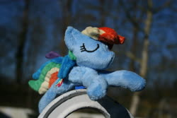 Size: 3888x2592 | Tagged: safe, artist:bastler, derpibooru exclusive, rainbow dash, pegasus, pony, irl, photo, plushie, sleeping, solo