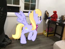 Size: 3272x2456 | Tagged: safe, artist:topsangtheman, cloud kicker, pegasus, pony, augmented reality, elmo, gameloft, irl, photo, ponies in real life, raised hoof, shocked, wings