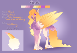 Size: 3500x2454 | Tagged: safe, artist:clay-bae, oc, oc:aquila, pegasus, pony, heterochromia, male, reference sheet, solo, stallion, tail feathers, unshorn fetlocks