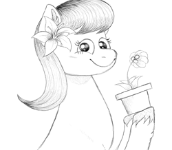 Size: 1089x951 | Tagged: safe, artist:anonymous, lily, lily valley, earth pony, pony, /mlp/, 4chan, bust, drawthread, looking at you, monochrome, pot, potted plant, solo