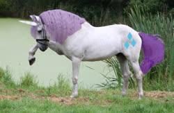 Size: 2880x1877 | Tagged: safe, rarity, horse, unicorn, cutie mark, disdain, grass, irl, irl horse, lake, photo, photoshop, raised hoof, recolored hoers, solo