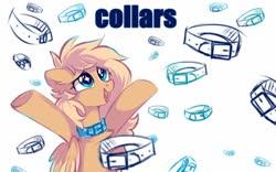 Size: 1600x1000   Tagged: safe, artist:mirtash, oc, oc only, oc:mirta whoowlms, pegasus, pony, collar, solo